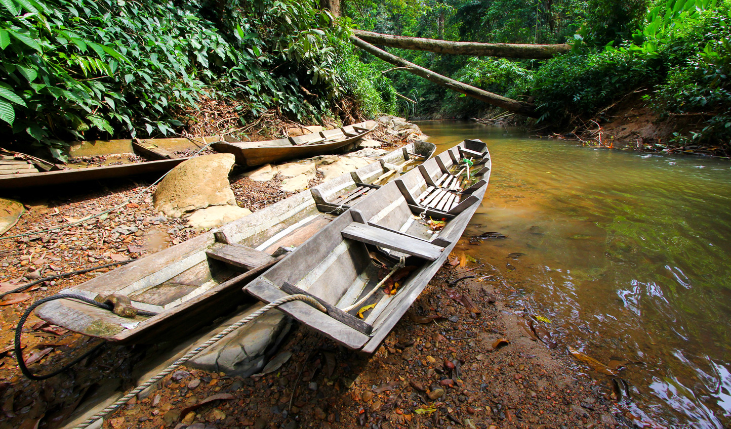 Explore the banks of the jungle from a traditional dugout canoe