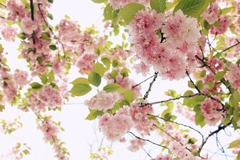 Spring Botanic Garden New York