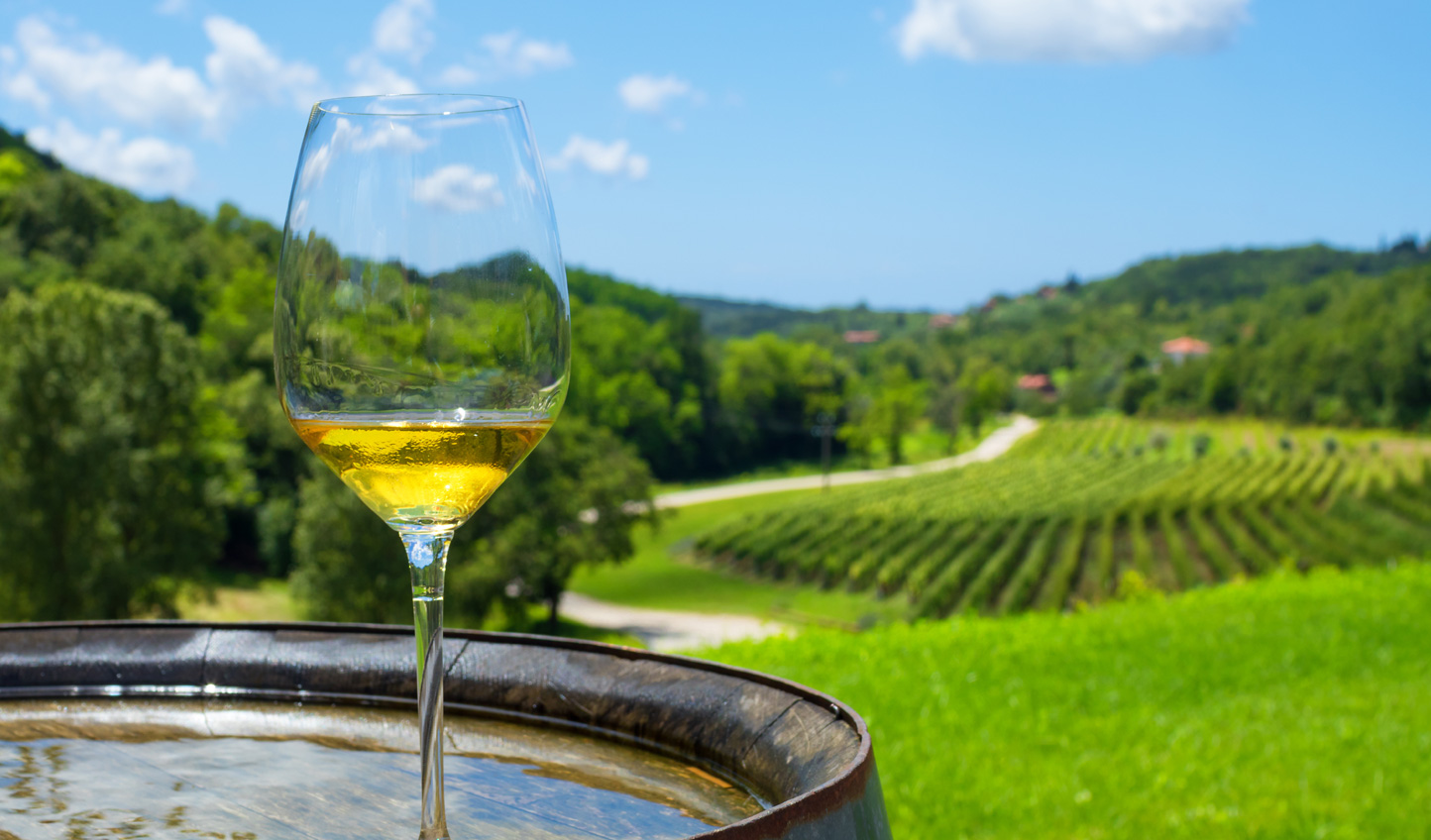 A winery experience in Croatia