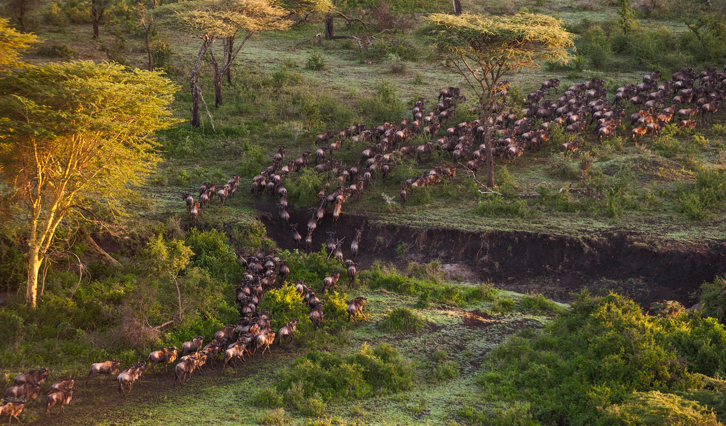 Visit between January and March to see the Great Migration passing through
