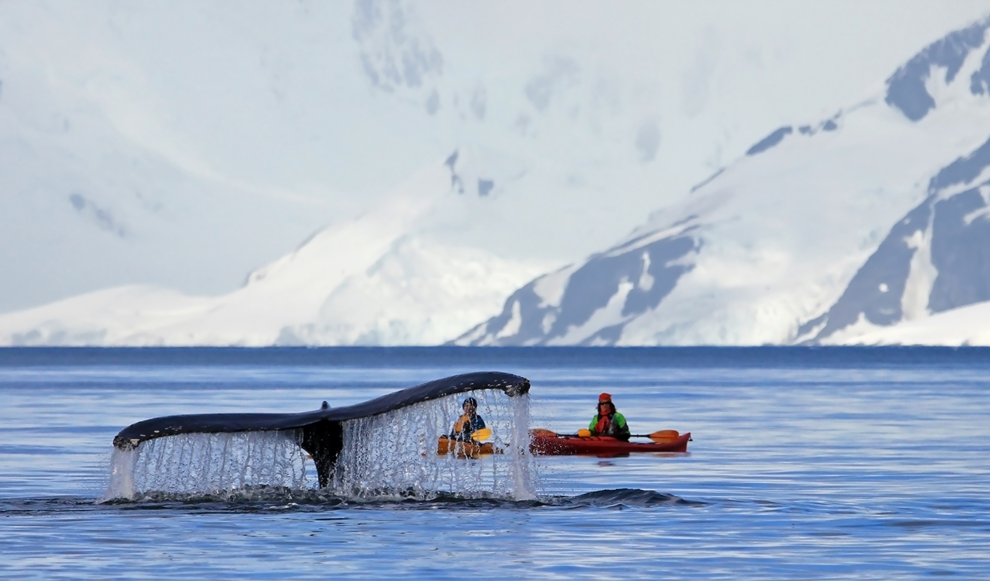An intimate wildlife experience exclusive to Greenland