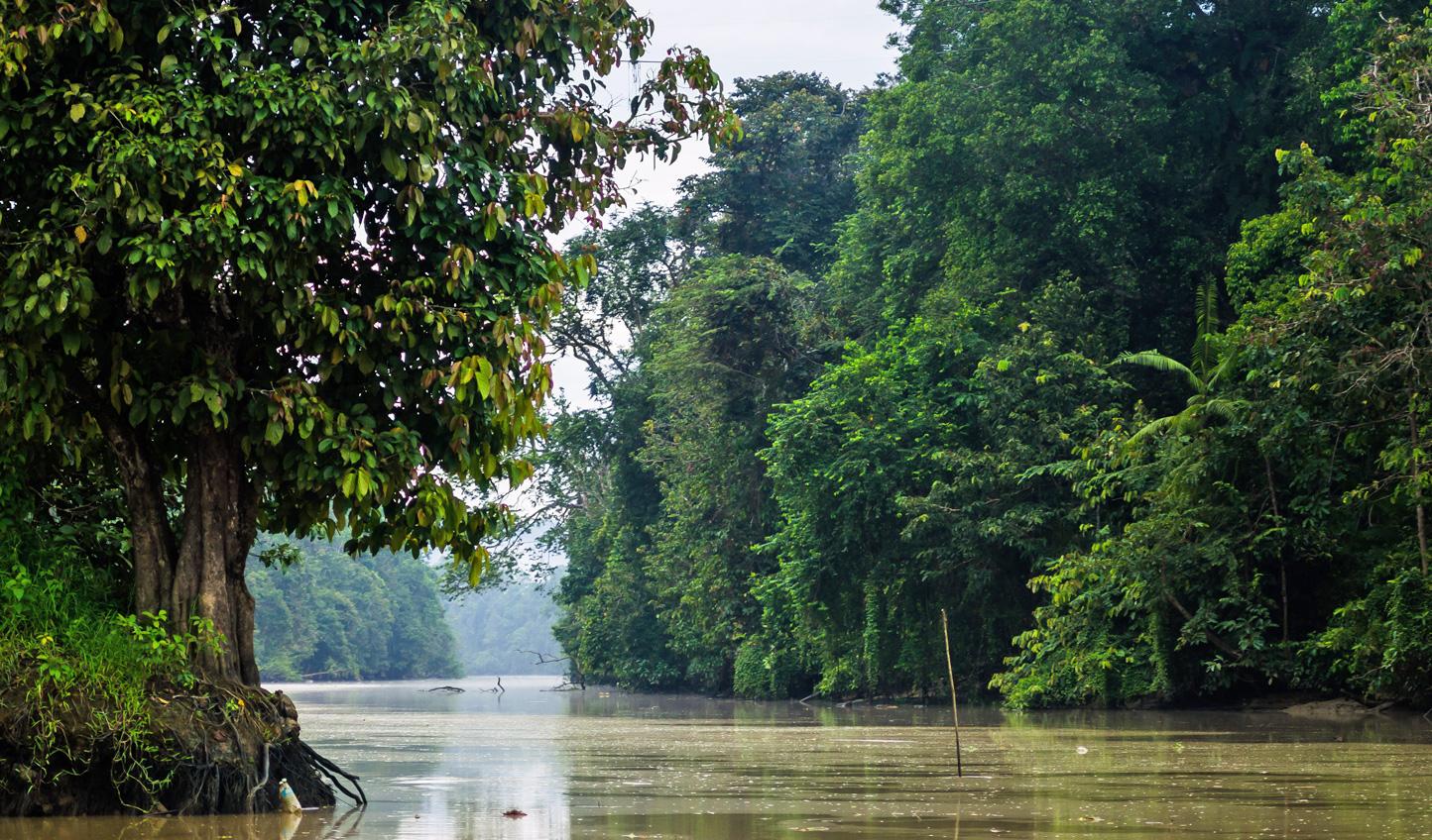Cruise down the calm Kinabatangan River
