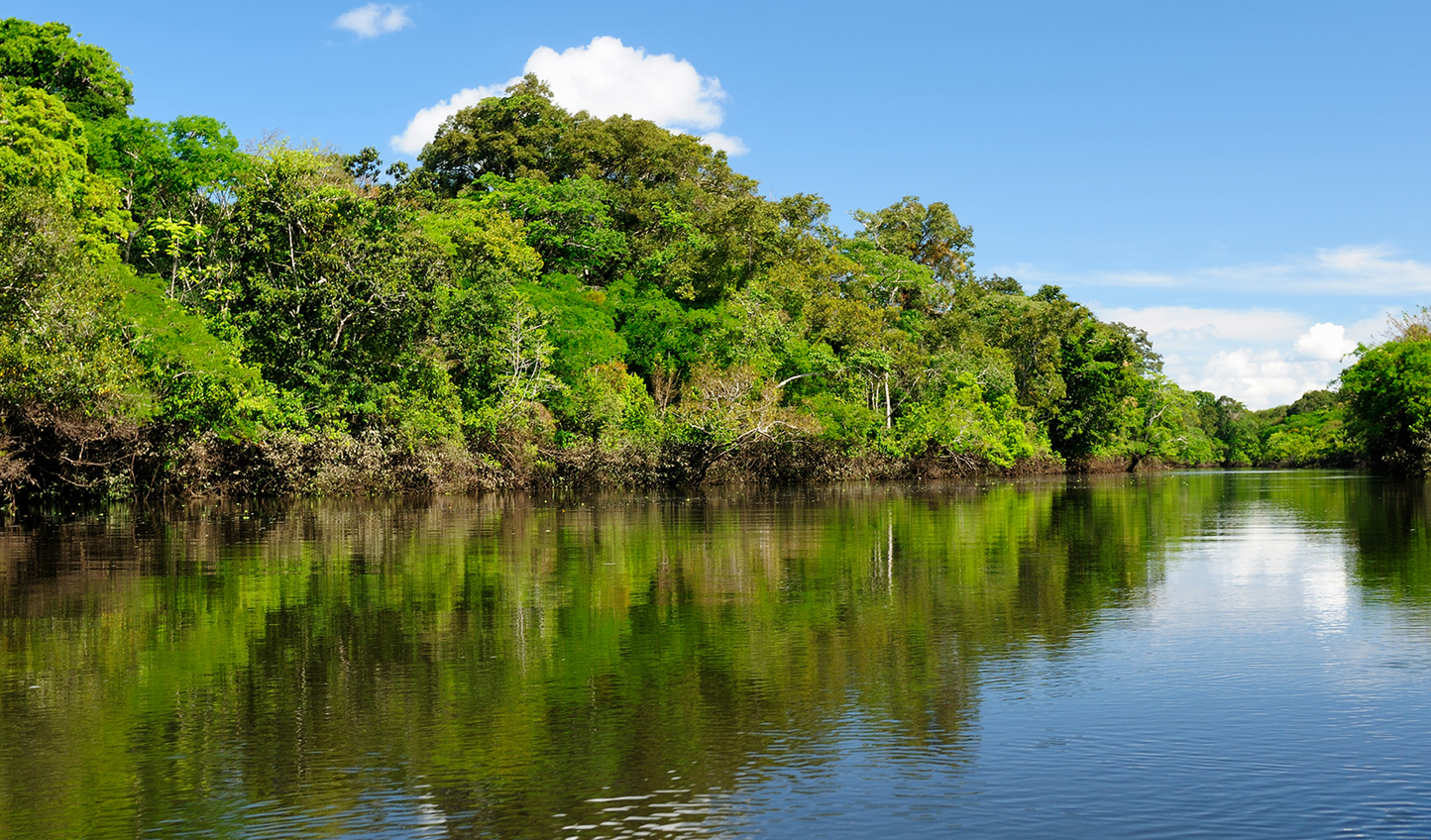 Feel immersed in the Amazon Rainforest