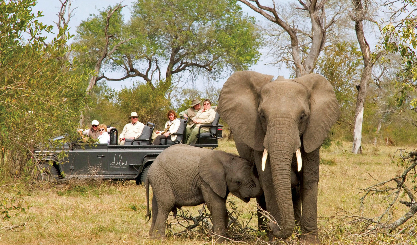 Elephants, lions, zebras, leopards, monkeys, and more