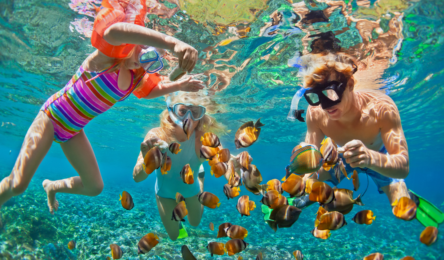 The Rosario Islands have vibrant reefs full of colourful marine life