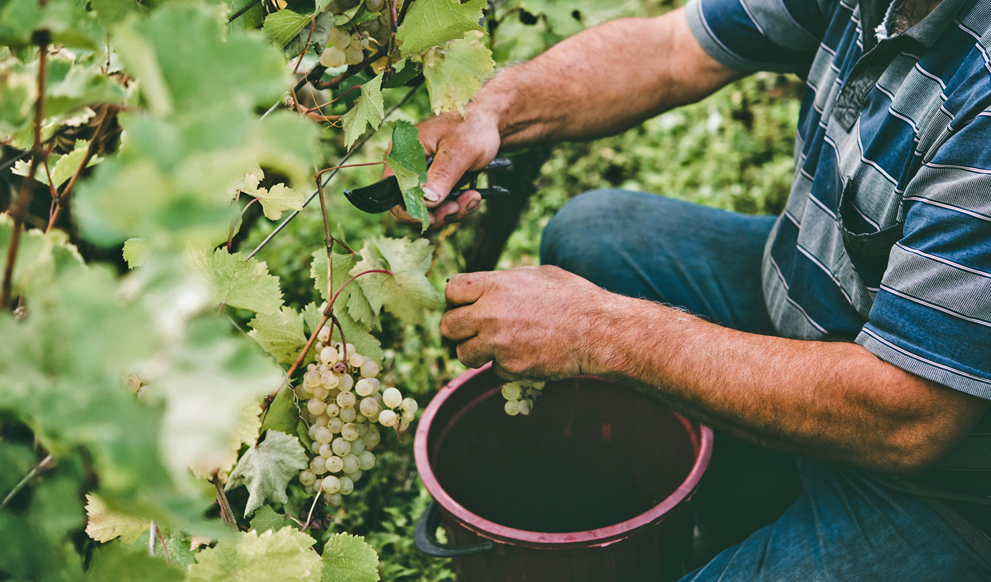 Witness traditional winemaking in the Alazani Valley