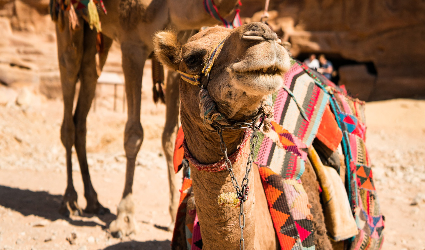 A few friendly faces on your way through Jordan and Oman
