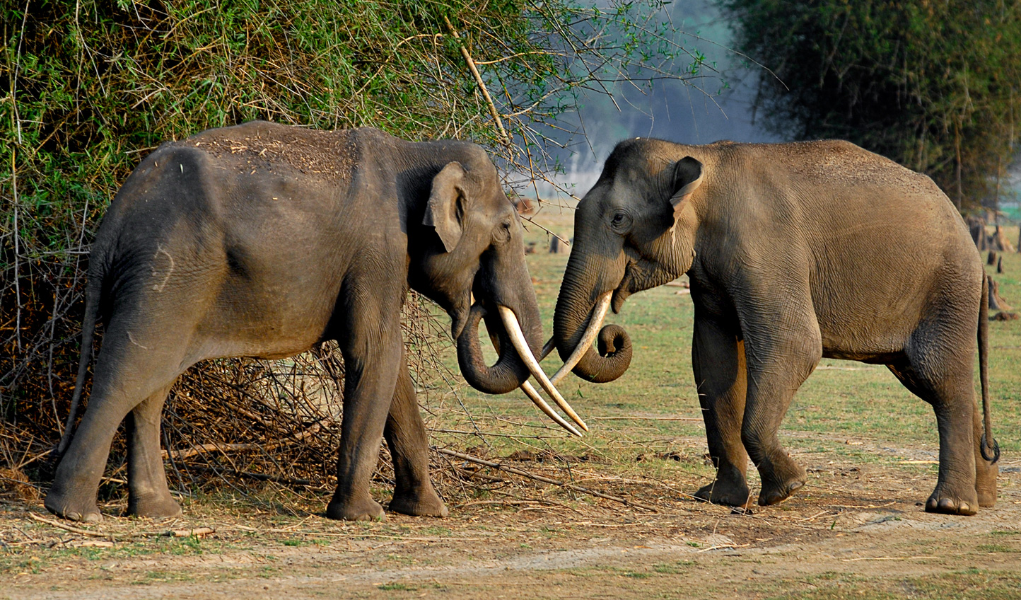 Visit during the summer to catch sight of the world's largest congregation of Asiatic Elephants