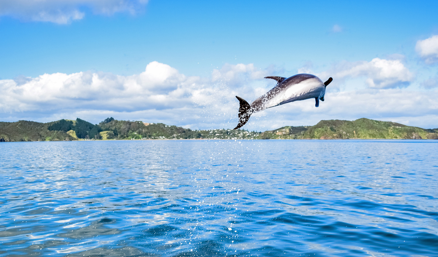 Head out onto the water and watch dolphins barrel through the air