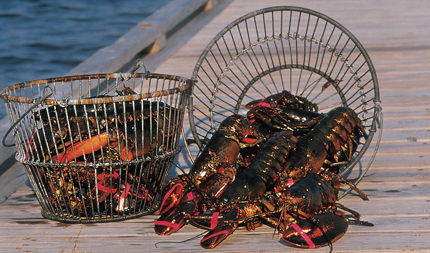 Haul in lobster traps from Nantucket Bay aboard The Wauwinet Lady
