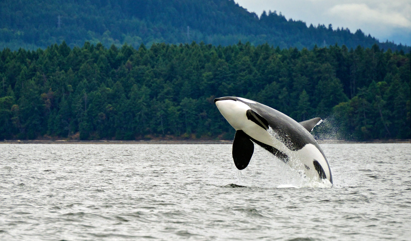 Head out in a zodiac and watch as whales breach before your eyes