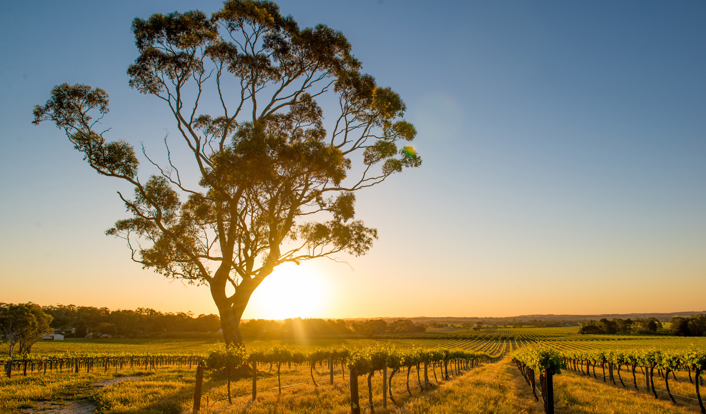 Raise a toast as the sun sinks down over the Barossa Valley