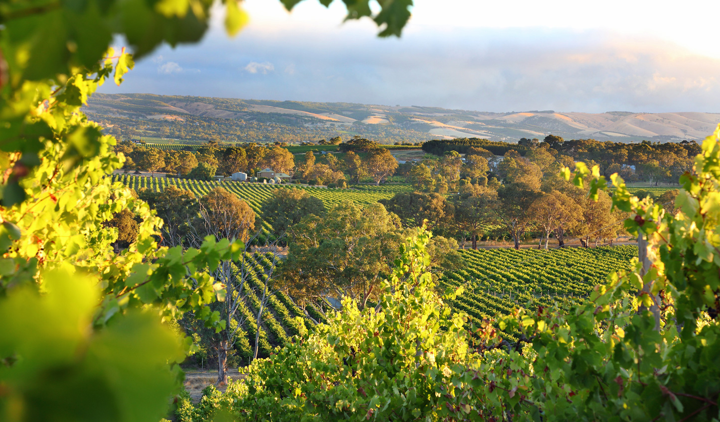 Spend a day tasting your way through the McLaren Vale in the company of a specialist wine guide
