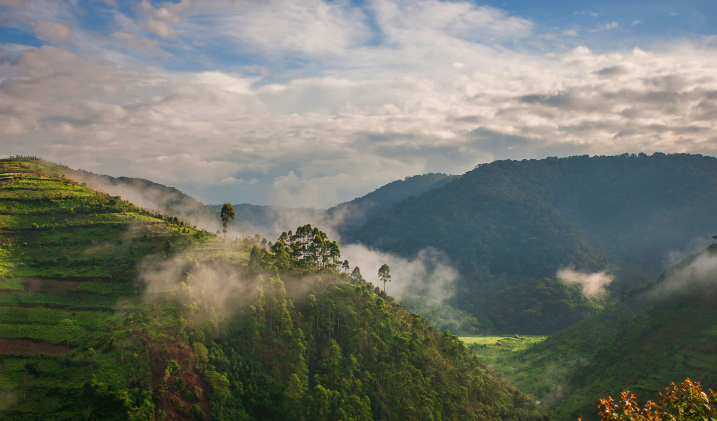 Hop across the border into Uganda and the Bwindi Impenetrable Forest