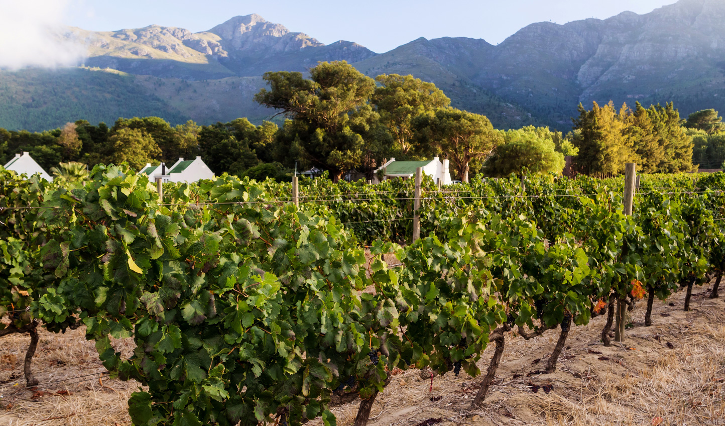 Meander the vines of Franschhoek