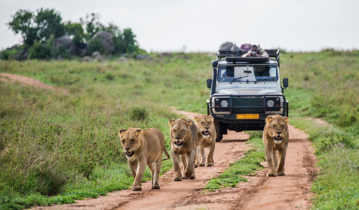 Master wildlife photography alongside the experts in a luxury photography safari