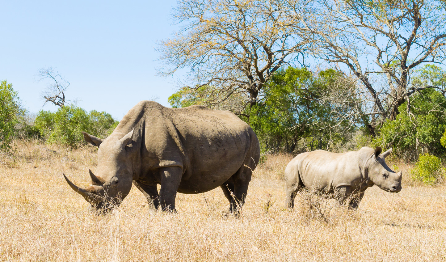 Set off in search of the Big Five