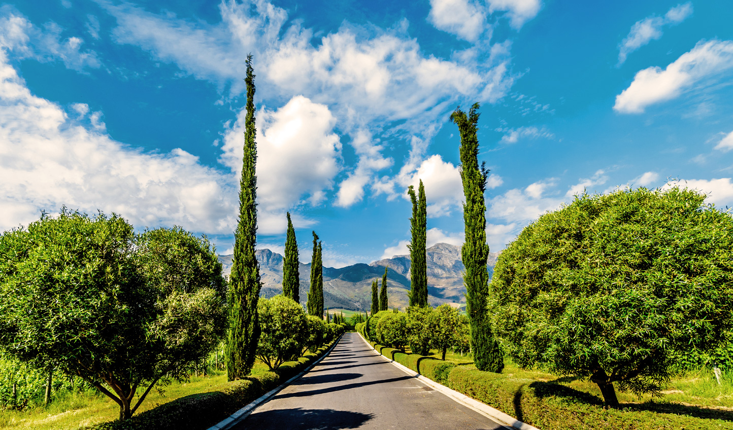 Head into the Winelands