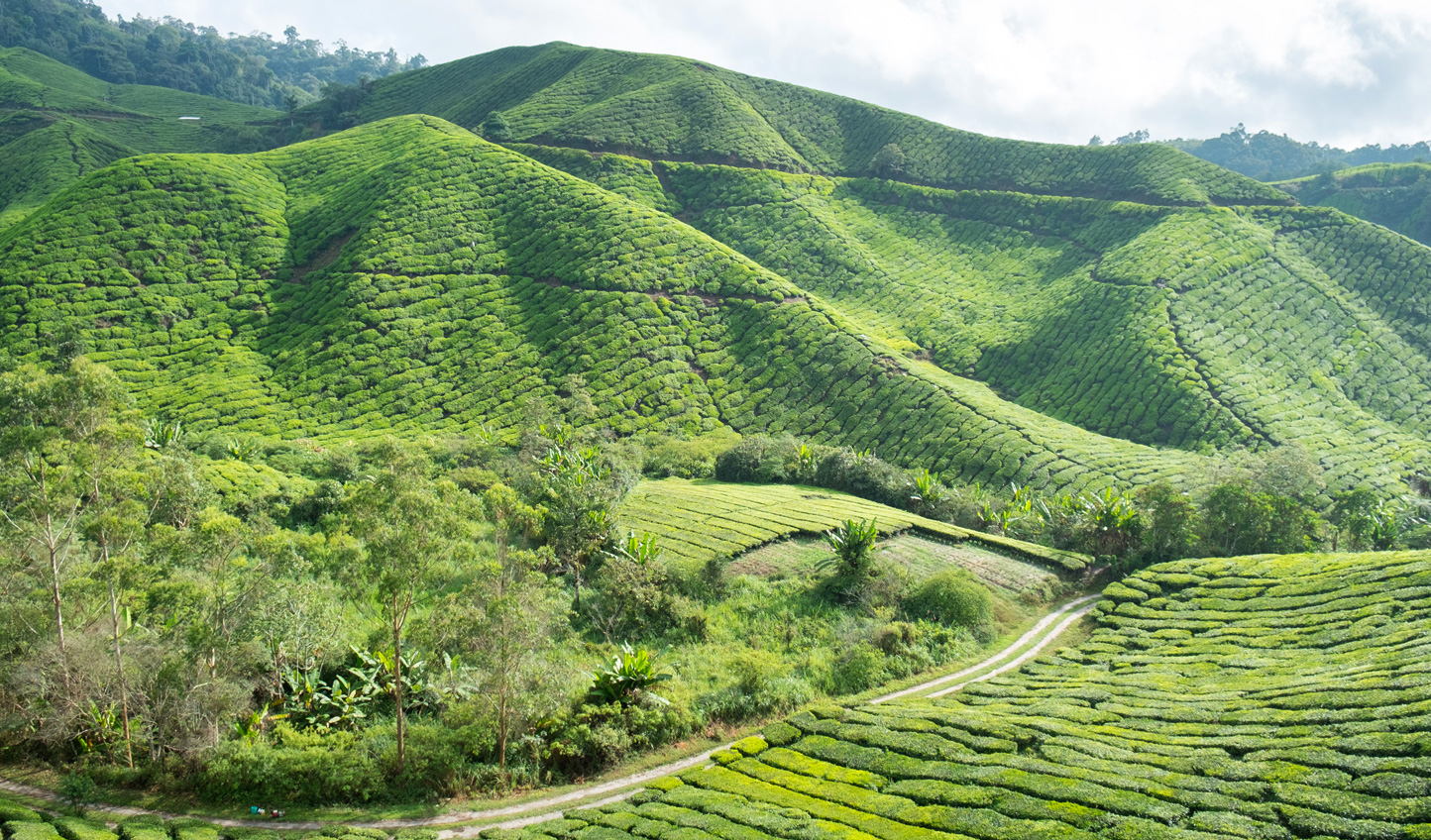 Relax out in the Cameron Highlands