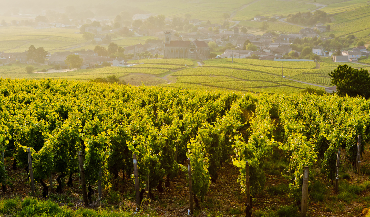 Learn the importance of bio-dynamic wine in Burgundy
