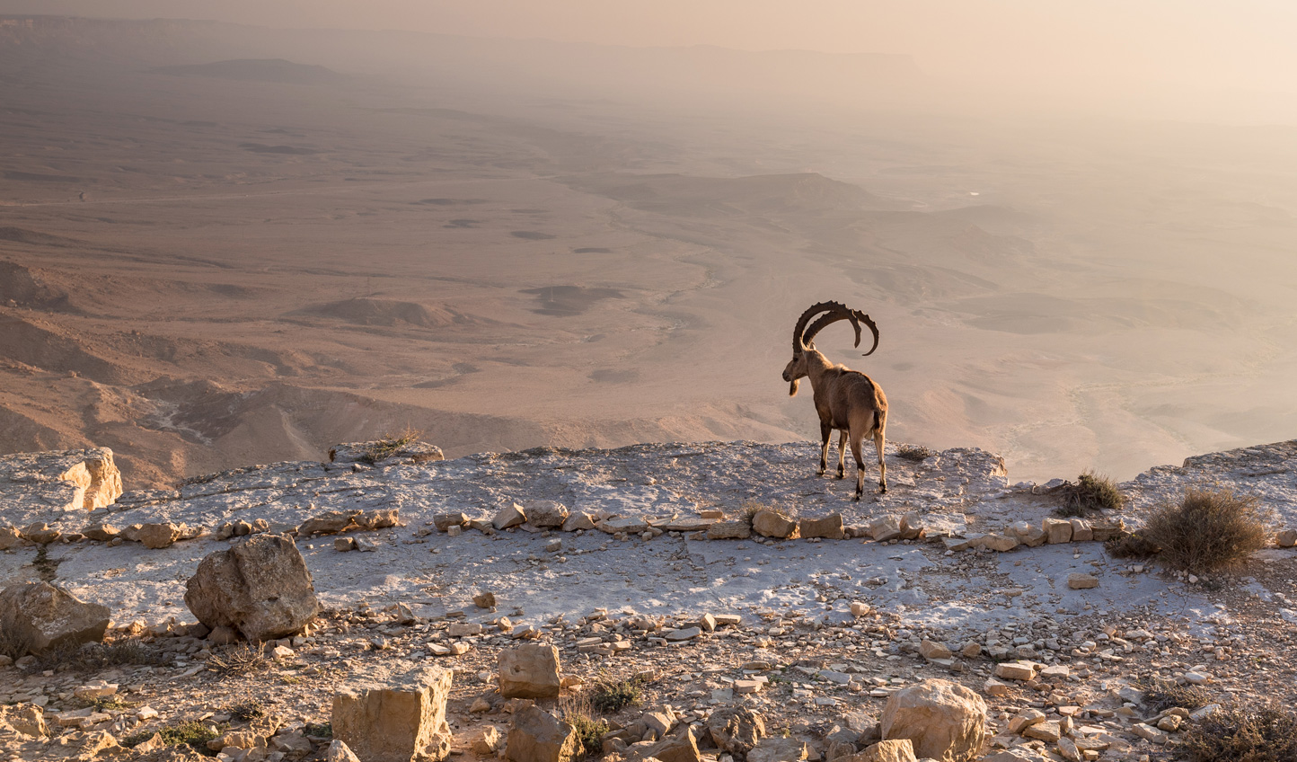 Embark on a luxury adventue through Israel taking in its historic cities, sweeping deserts and fascinating culture
