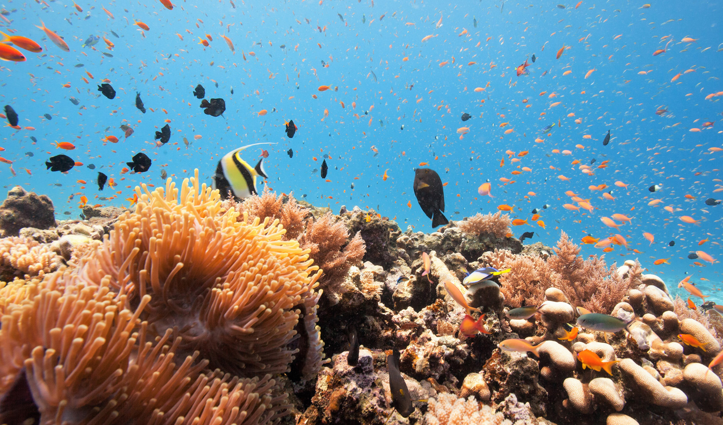 Dive into a world of colour amongst the vibrant reefs surrounding the island