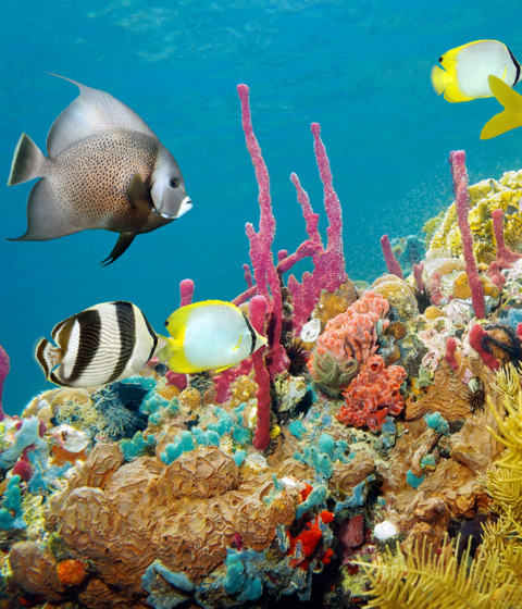 Jamaica snorkelling