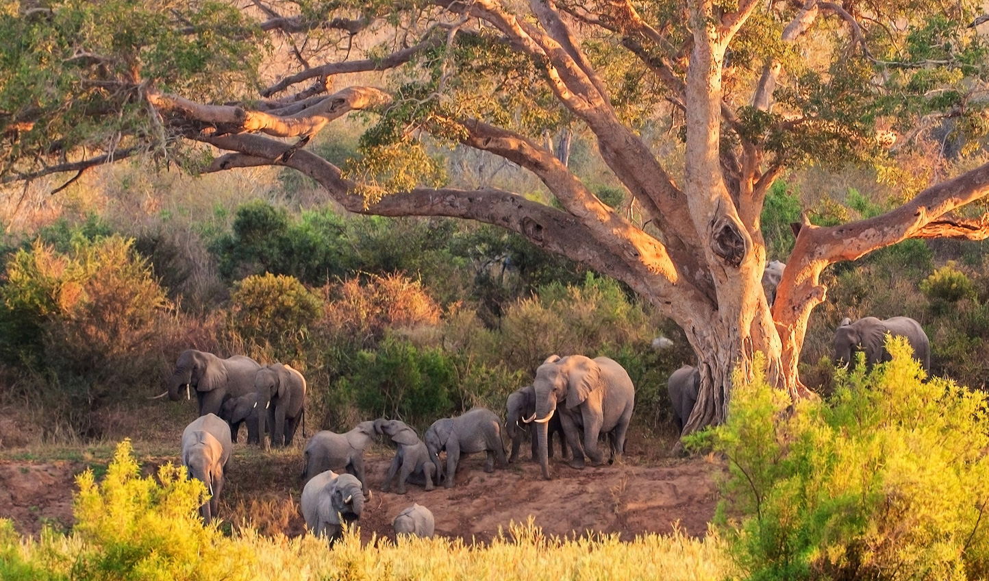 Unforgettable moments await on your South African safari