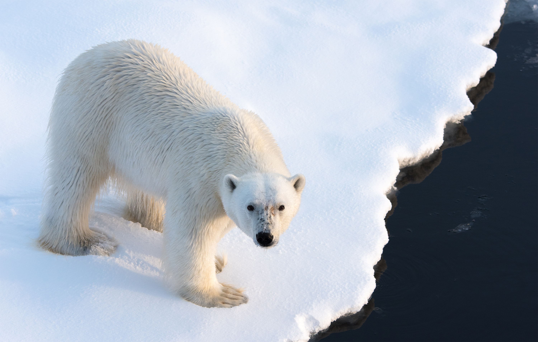 Adventure honeymoon in Greenland
